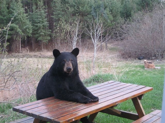 bearpicnic.jpg